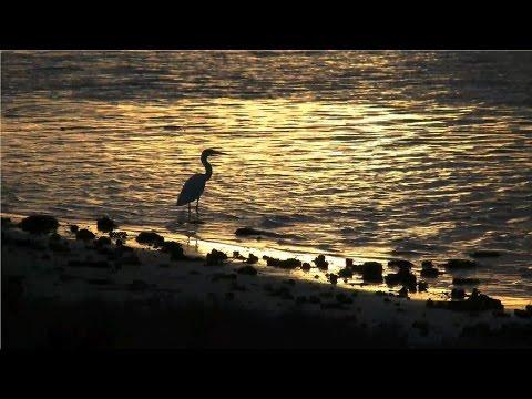 Beautiful Nature Video & Relaxing Music - Serenity (HD)