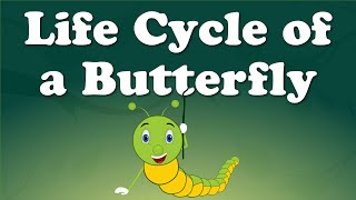 Life Cycle of a Butterfly | #aumsum