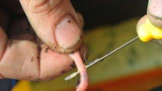 Как правильно насадить червя на фидер