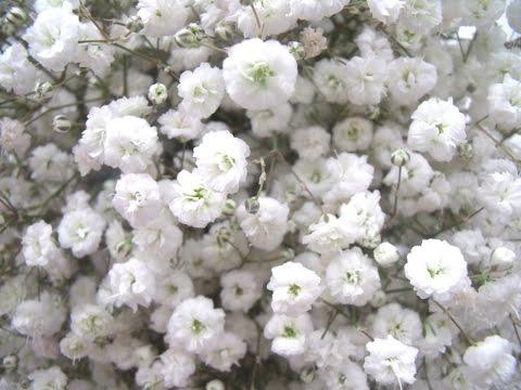 Удачный сезон. Ампельные цветы - герань, петуния, фуксия и другие