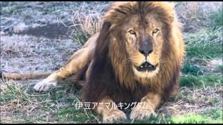 静岡県観光スポット 動画キャプチャー