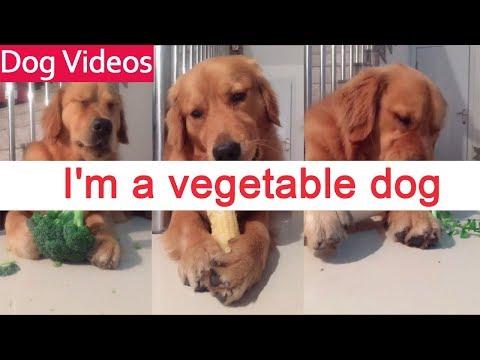 Σκύλος vegetarian