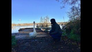 영국풍경: 서리의 플릿호수(Fleet Lake | サリーのフリット湖)