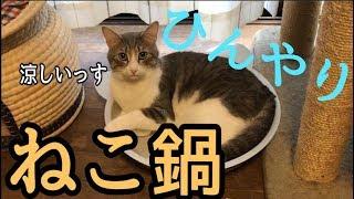 ひんやりねこ鍋で丸くなる猫が可愛すぎるww