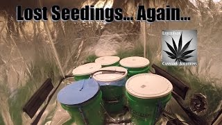 How to tell if your cannabis seeds are bad