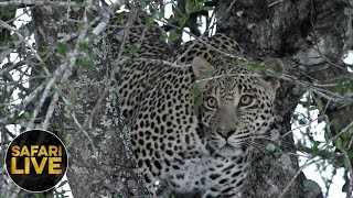 safariLIVE - Sunrise Safari - October 20, 2018