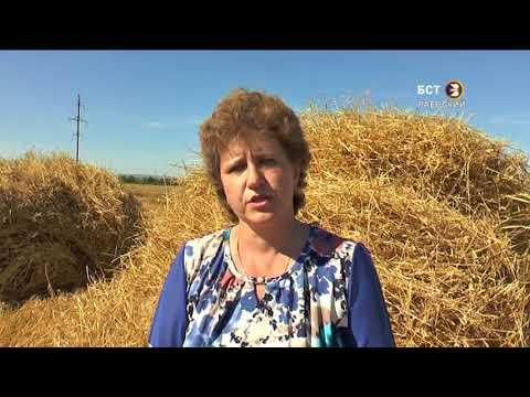 В хозяйствах района идет уборка урожая