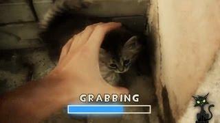 Игра «Хватай кота»