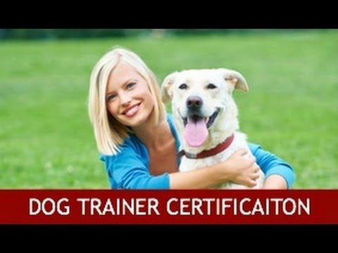 Dog Training Certification - YouTube