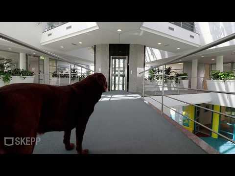 Video Noord Brabantlaan 303-307 Eindhoven De Hurk