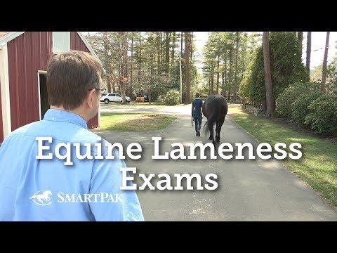 Video da agenti patogeni equine
