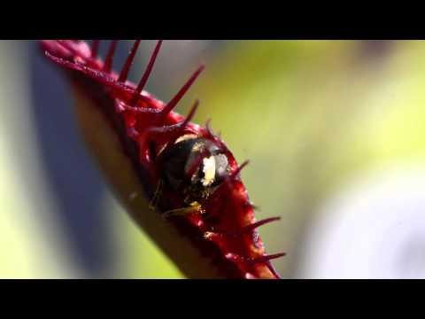 Ob die Würmer der Spirituosen fürchten