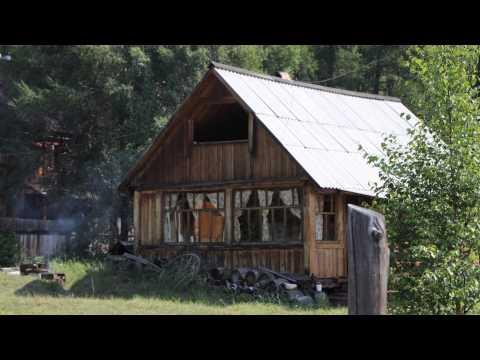 Come curare leczema a un pastore tedesco