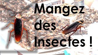 preview picture of video 'L'Iné - Mangez des insectes ! (HD)'