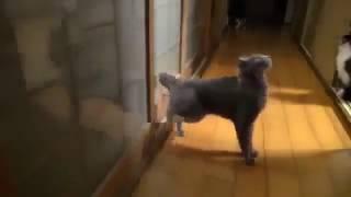Приколы с кошками Побег кошек Cats joke