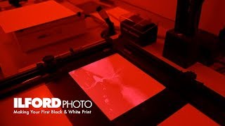 Making Your First Black & White Darkroom Print