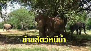 ซาฟารีปาร์ค ขนย้ายสัตว์ไปอยู่ในที่ปลอดภัย หนีน้ำท่วมกาญจนบุรี