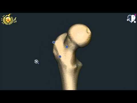 Girato con osteoartrosi dellanca