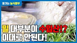 [영상뉴스] 농식품부 - 제1차 밀 산업 육성 기본 계획 | 해피 우리밀 |