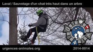 preview picture of video 'Urgences Animales - Sauvetage Animal Rescue (20140321-001) - Des Prairies (Laval)'