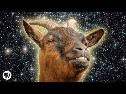 Kozy!
