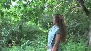 DIY Tree Medicine