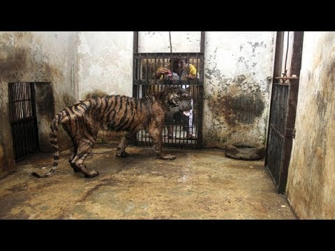 Indonesia's Zoo Of Death Is A Living Hell For Its Animals, And It Needs To Be Shut Down Now
