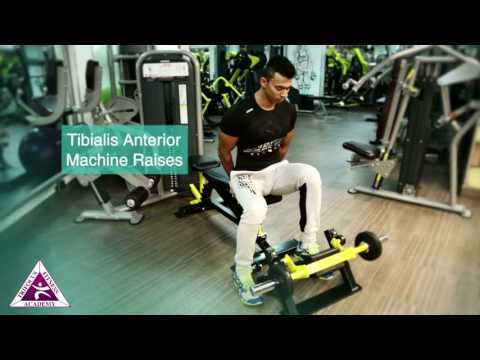 Tibialis Anterior Machine Raises