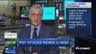 How to choose the right pot stock for your portfolio
