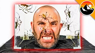 I Put My Head in a Box of SPIDERS!
