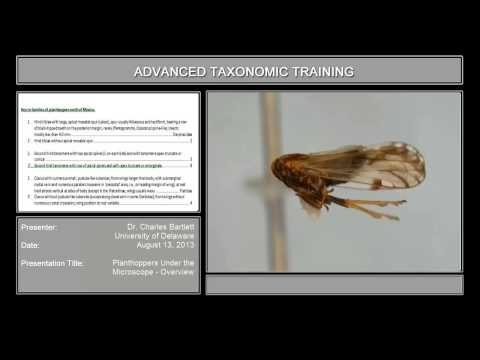 Planthoppers under the microscope – overview