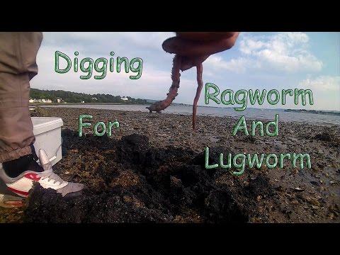 Pinag-aaralan sa mga worm pahiwatig