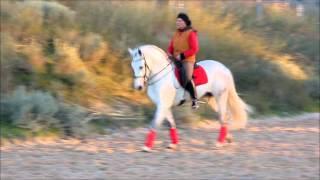 Finca Barroco,VK-Pferd,BOLERO CCLXXXI,PRE, Wallach, 7 Jahre