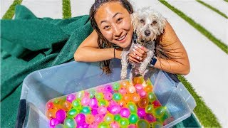 PUPPY VS WATER BALLOONS!!