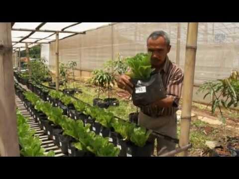 Pemanfaatan Limbah Hidroponik Sistem Fertigasi Terbuka