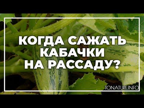 Когда сажать кабачки на рассаду? | toNature.Info