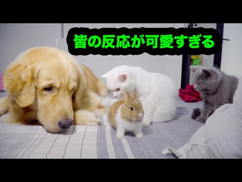 , title : '初めて新入りうさぎに会った犬, 猫たちの反応が超おもしろい!