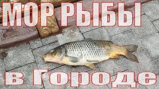 Апрельские новости/Рыбалка в Казахстане/Нур-Султан 2019