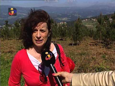 """""""A reflorestação do pinheiro bravo"""" Sofia Fernandes -TVI"""