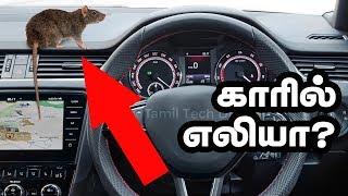 எலி கார் பக்கமே வரவிடாமல் ஓட ஓட விரட்டும் பொருள்கள் இதுதாங்க  | Protect CAR from RATS