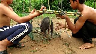 Believe This Trapping? New Wild Pig Trap Technique Using Nets Cage Trap That Work 100% By Smart Boy