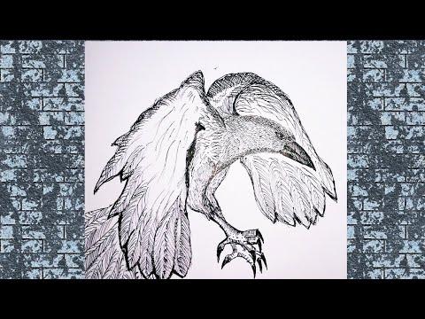 Kakatua Cara Menggambar Dan Mewarnai Gambar Burung Untuk Anak