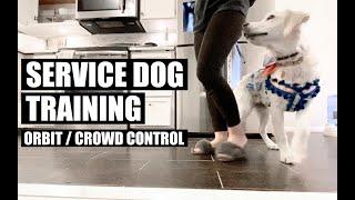 Service Dog Training - Orbit / Crowd Control