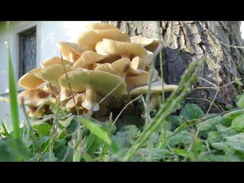 Farmaci per trattamento di unghie di fungo