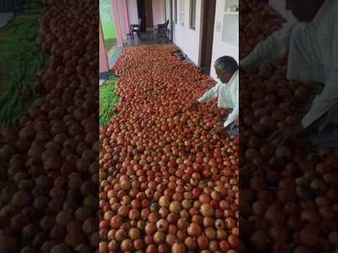 Progressive Farmer from Rajasthan- Rajnish Lambha ( Hardev Baag & Udhyan Nursery) - 1