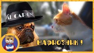 Котик Рыжик готовится к путешествию и знакомится с мафиозником