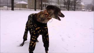 This awesome dog loves his Batman pajamas.