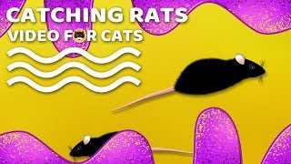 CAT GAMES - Catching Rats! Mouse Video for Cats.
