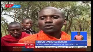 KTN Leo: Wakazi wa eneo la Oldonyok-Kajiado wanahofia maisha baada ya kuvamia na ndovu