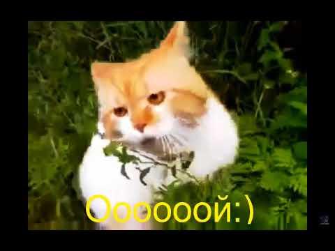 Кот говорит - Ооой чувакиии! Говорящие коты